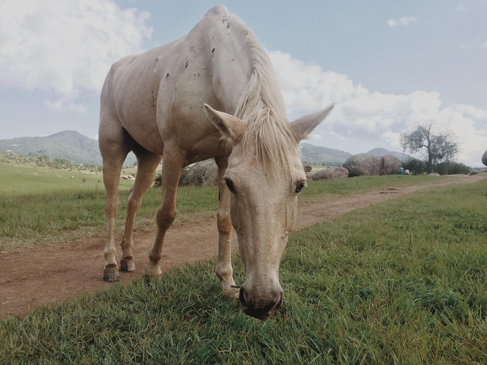Yoga & Reit Retreat Toskana Pferde